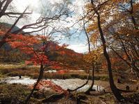 秋山郷を散策~天池~布岩~ブナのトンネル~前倉トド展望台 - HOT HOT SPRINGS