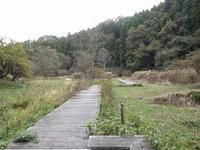 曇りの11月。黄葉。 - 千葉県いすみ環境と文化のさとセンター