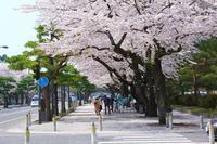十和田市春祭り(十和田市) - こんざーぎのブログ(Excite支店)