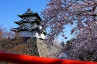 弘前さくらまつり2014.4.29(弘前市) - こんざーぎのブログ(Excite支店)