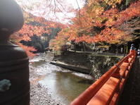 京都高雄の紅葉 - 健康で輝いて楽しくⅡ