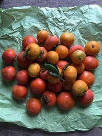 種子島から安納芋、隣家から果物・終末期医療の現実 - 娘といっしょ