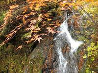 静かなお山の森歩き~♪の予定が… 茸採山PartⅦ【奈良】11/10 - 静かなお山の森歩き~♪