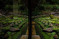 ダイモンジソウ咲く古知谷阿弥陀寺 - 花景色-K.W.C. PhotoBlog
