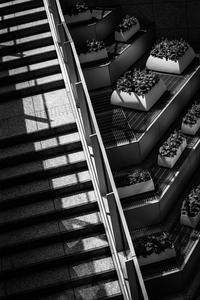 階段に寄り添う花壇 - Silver Oblivion