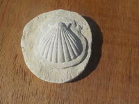 小さな貝殻の石膏型制作 - 冬青窯八ヶ岳便り