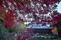 お寺の庭園の紅葉百済寺 - 峰さんの山あるき