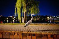 夜のアオサギくん - 美由紀の六角オセロ ラブ