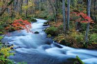 紅葉の奥入瀬渓流-8 - 自然と仲良くなれたらいいな2