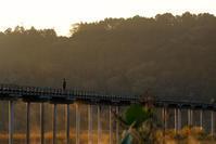 寒い朝 - 長い木の橋