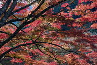 錦模様の季節 - 疾風谷の皿山…陶芸とオートバイと古伊万里と