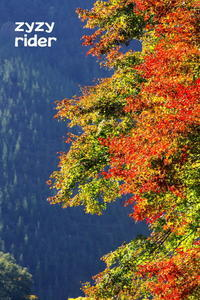 御岳渓谷の紅葉(その1) - ジージーライダーの自然彩彩