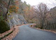 枯れ木も山の賑わい - 長女Yのつれづれ記