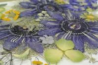 時計草の押し花 - アトリエ・アキ
