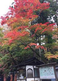 石山寺の紅葉in Ishiyamadera temple - K e  i  k  o     A  o  i  イ ラ ス ト 日 記