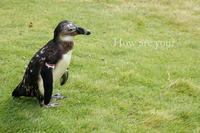 penguin - ナナイロノート