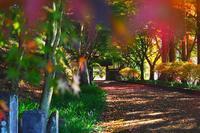 金蔵院で紅葉(2)・・・色彩豊かトリコロール参道♪ - 『私のデジタル写真眼』