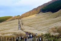 箱根・仙石原 - 暮らしの中で