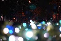 御堂筋イルミ2018@2018-11-12 - (新)トラちゃん&ちー・明日葉 観察日記