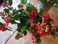 クリスマスホーリー - フラワーショップデリカの花日記