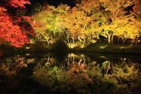 「そうだ京都、いこう(2018年度版)」←高台寺 - ファインダーの中に惹かれて