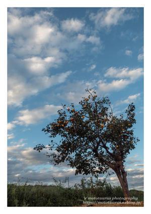 ♉ mototaurus photography