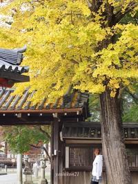 奈良NaraⅥ - 花鳥風猫ワン