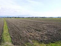 砂田米七城町『砂田のれんげ米』平成31年度も稲ワラとれんげの有機肥料で変わることなく育てます!後編 - FLCパートナーズストア