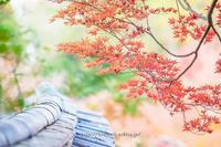 宝福寺紅葉 - 道草Photo Life2