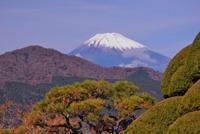 箱根長安寺の秋 - いぐさん流 山と花の写真(富士山)