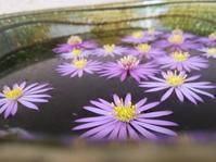 花、たゆたふ… - 侘助つれづれ