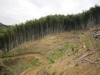 林業開始 - アラカン山仕事挑戦日記