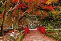 落ち葉の紅葉 - kogomiの気ままな一コマ