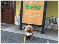 孫っちたちは明日千葉に帰ります、そして、大は明日退院です、会えずに残念だったね(´A`。)グスン - さくらおばちゃんの趣味悠遊