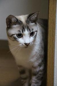 ストレス - ぎんネコ☆はうす