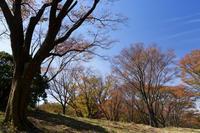 屏風岩の桜紅葉 - katsuのヘタッピ風景