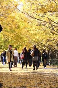 昭和記念公園で秋を楽しむ - 子猫の迷い道Ⅱ