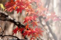 午後の光 - harley-katydid