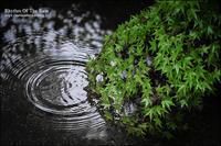 雨のリズム - すずちゃんのカメラ!かめら!camera!