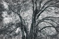 Canopy - No Man's Land