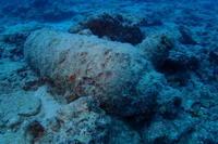 18.11.20ゲストの居ぬ日に、バタバタ - 沖縄本島 島んちゅガイドの『ダイビング日誌』
