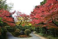 紅葉情報◆日本庭園「有楽苑」 - 名鉄犬山ホテル情報