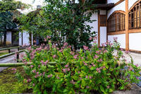ホトトギス咲く(大徳寺塔頭・興臨院) - 花景色-K.W.C. PhotoBlog