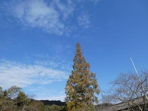 つる編みイベントの準備・・・孝子の森 - 「みさき里山クラブ」(孝子の森)のホームページ