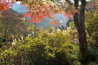 御岳渓谷 - お花びより