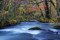 紅葉の奥入瀬渓流-10 - 自然と仲良くなれたらいいな2