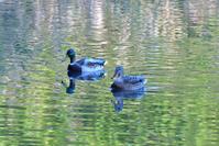 秋色の池に - 季節の映ろひ