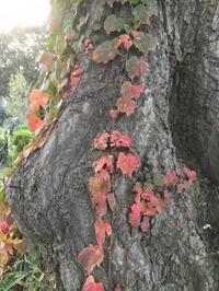 食欲の秋 - 好きなものに囲まれて2
