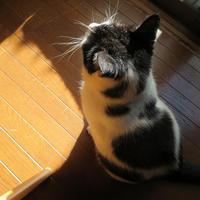 トメと鼻モモちゃん - にゃルニア日記