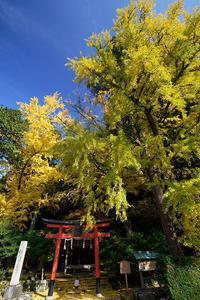2018京都の紅葉・小野郷岩戸落葉神社 - デジタルな鍛冶屋の写真歩記